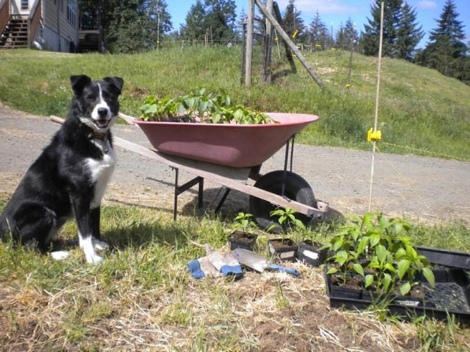 garden dog help